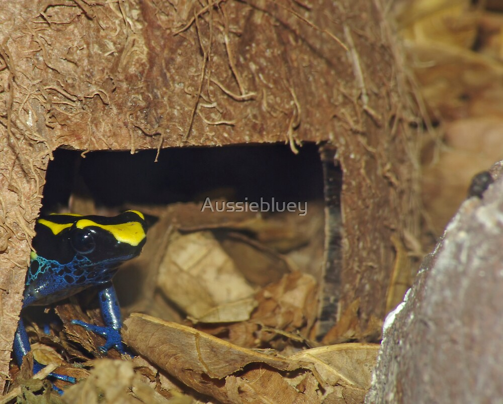 Poison Arrow Frog. by Aussiebluey