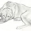 Dog Chewing on Bone by Stephanie Small
