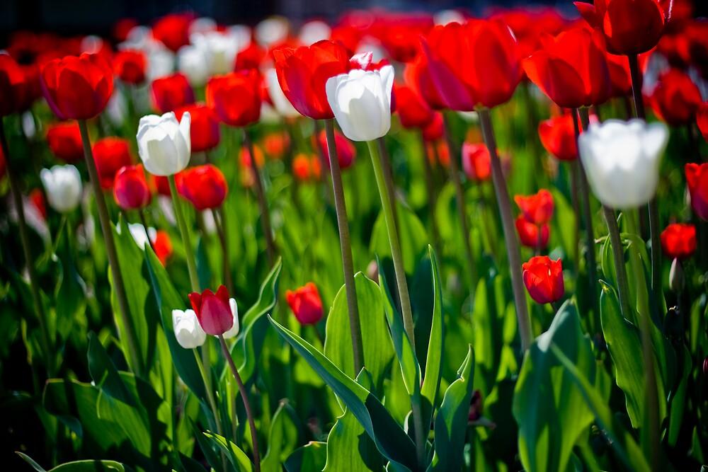 Spring Flowers - Borås - Sjöbo Torg by Sam Allen