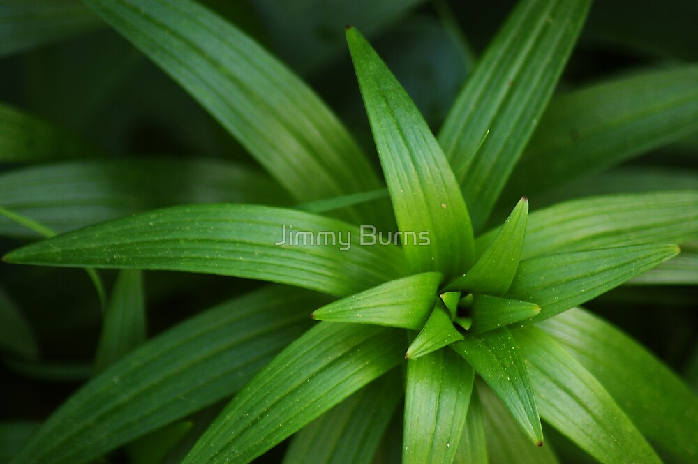 Green by Jimmy Burns