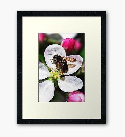 Bee's Knees. Framed Print