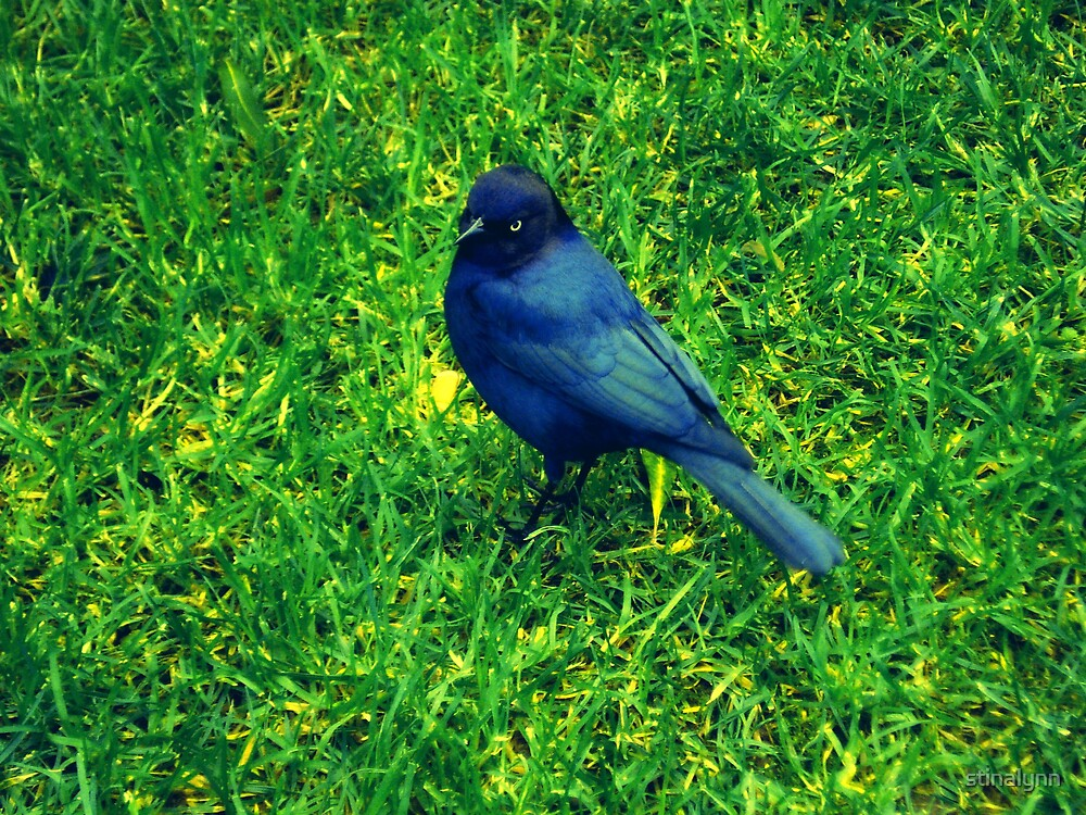 Black Bird by stinalynn