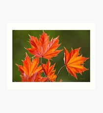 Maple Leaves Abstract Art Print