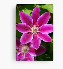 Pink Clematis Flower Canvas Print
