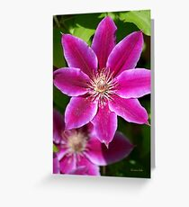 Pink Clematis Flower Greeting Card