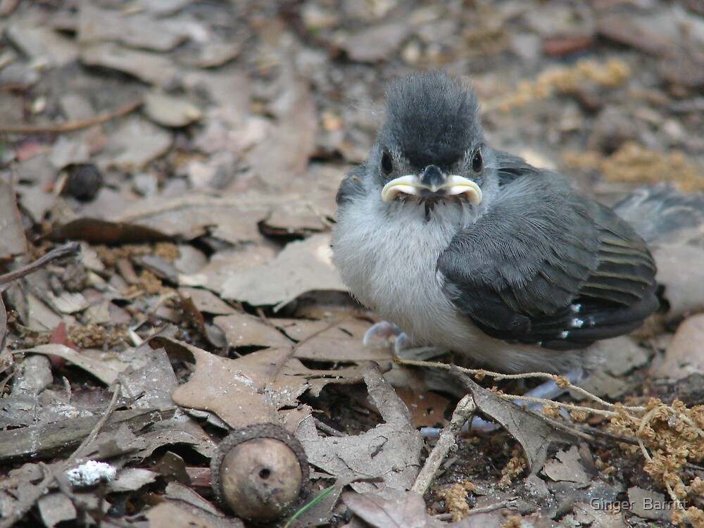 Titmouse! by Ginger  Barritt