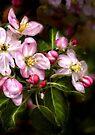 Michigan's Blooms  by Karri Klawiter