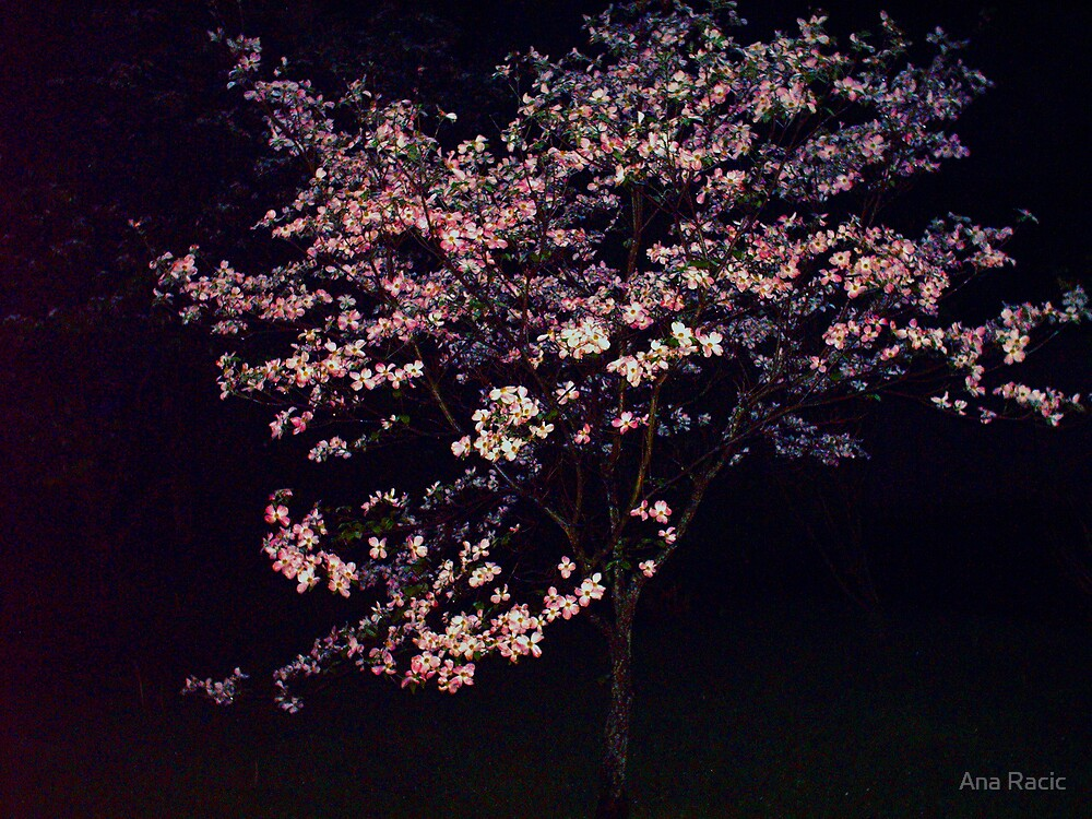 My Favorite Tree by Ana Racic