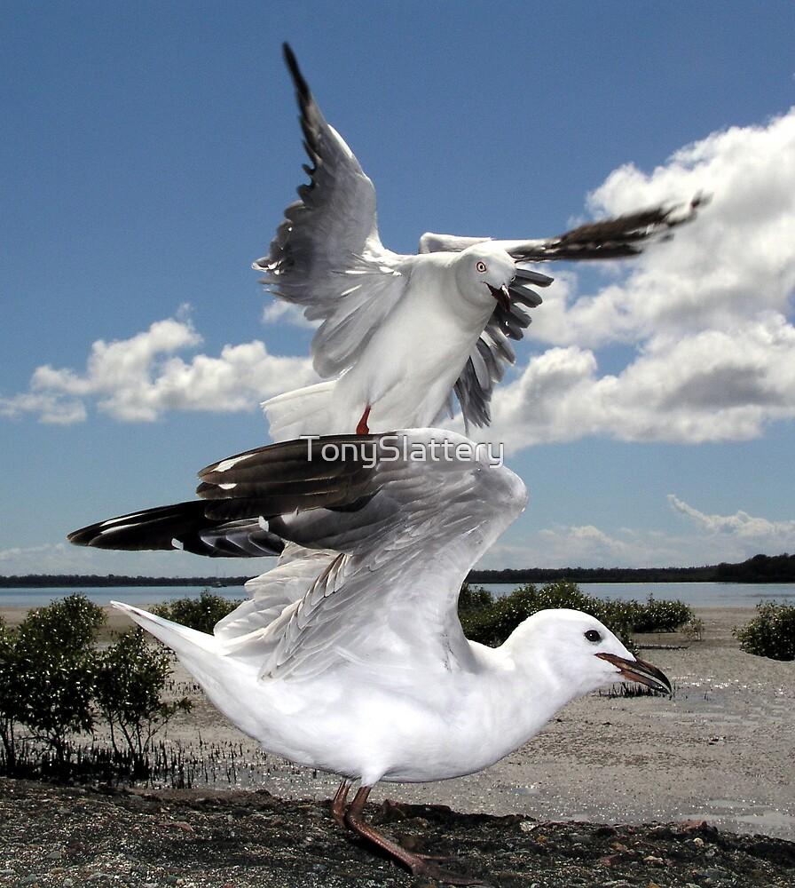 Seagulls landing at Tin Can Bay by TonySlattery