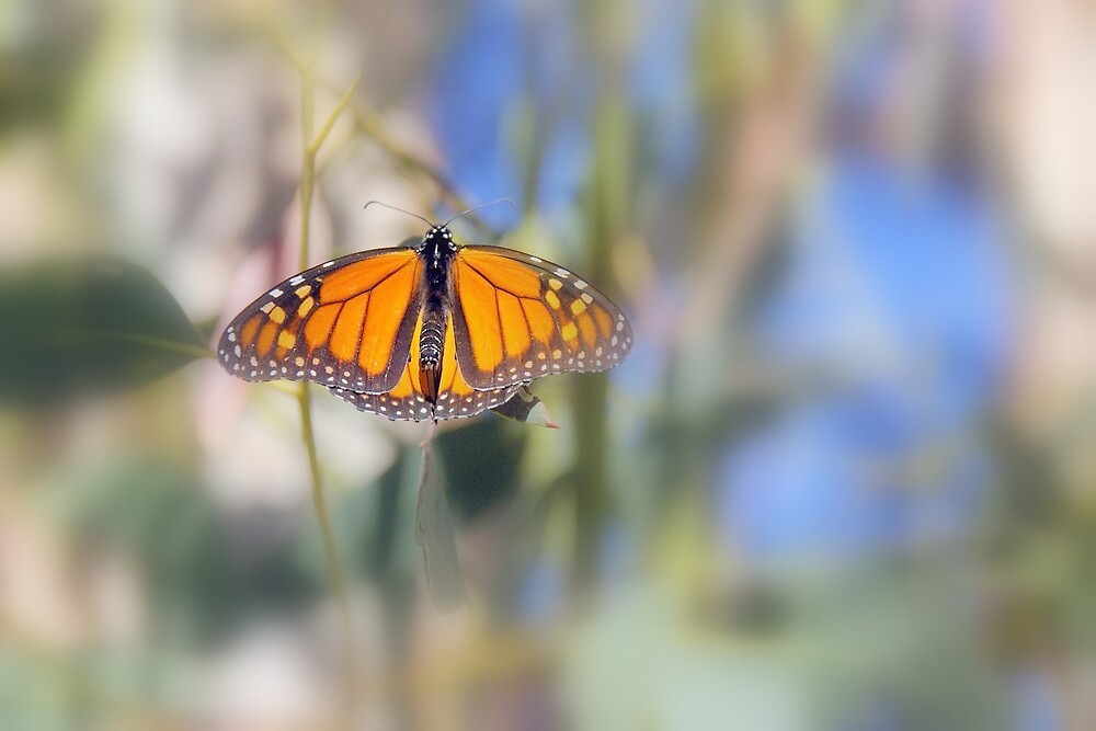 The butterfly by Deidre Cripwell