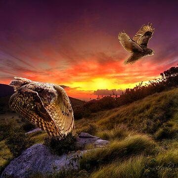 Raptors Ascending at Jane's Bald by milesmoody