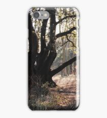 Old Tree iPhone Case/Skin