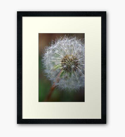 Dandelion! Framed Print