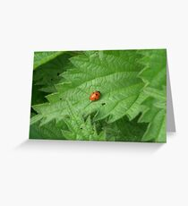 The last ladybird Greeting Card
