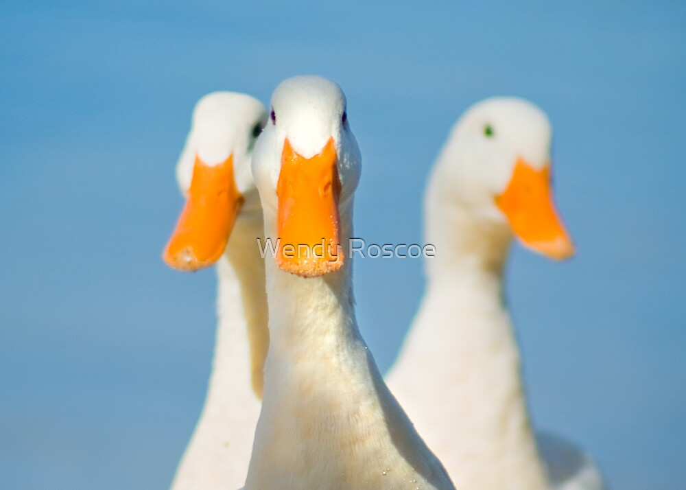 Ducks To You by Wendy Roscoe