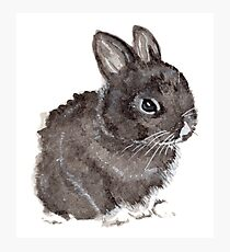 Little bunny rabbit Photographic Print