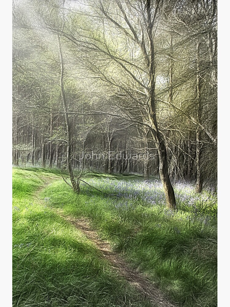 Woodland Light And Shade Greeting Card By Johne Redbubble