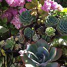 Summer Succulents by Barbara Wyeth