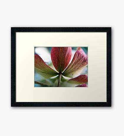 Better with Age Framed Print