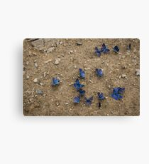 Enchanting Butterflies - Soft Blue Sapphires on the Ground Canvas Print