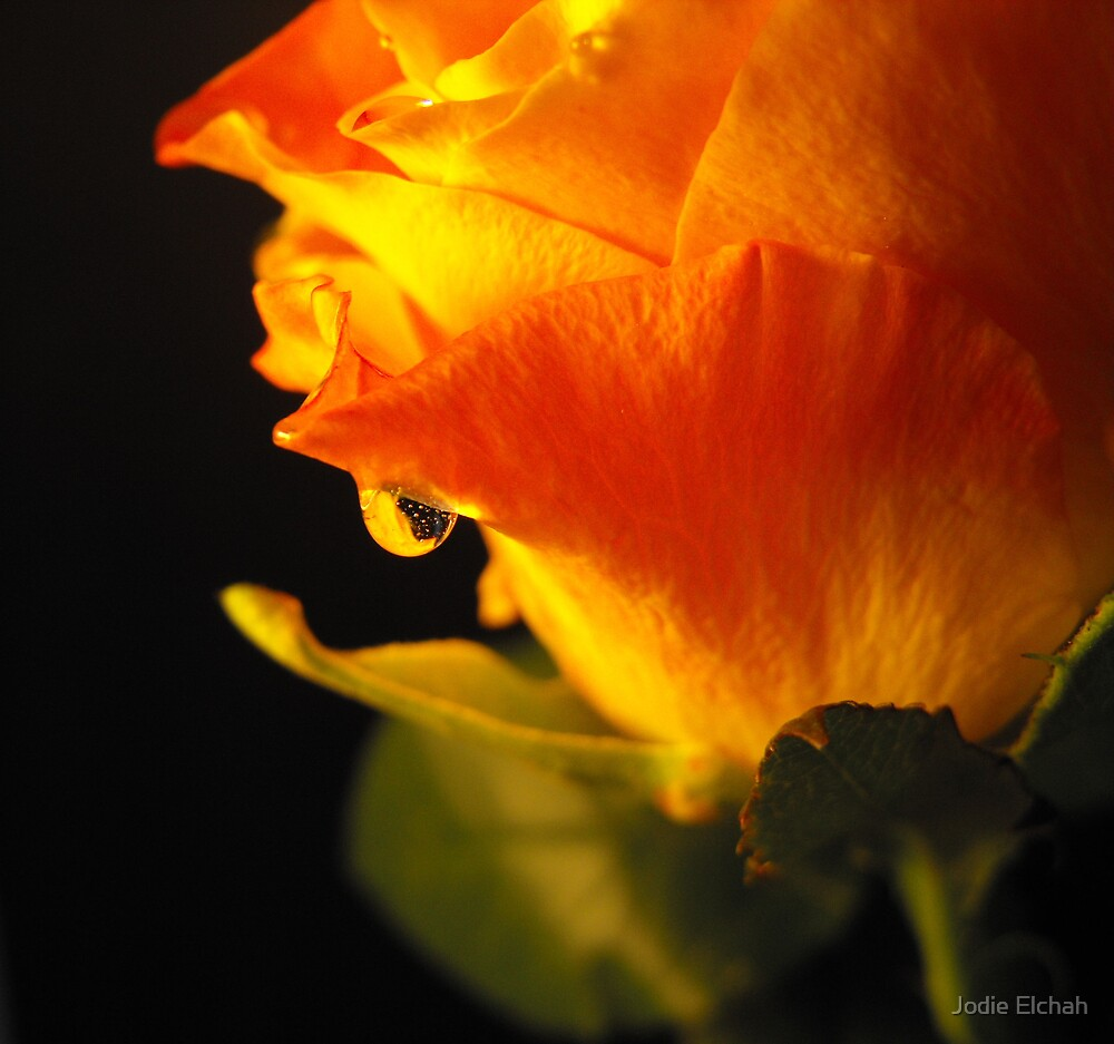 Luke's Mothers Day Rose by Jodie Elchah