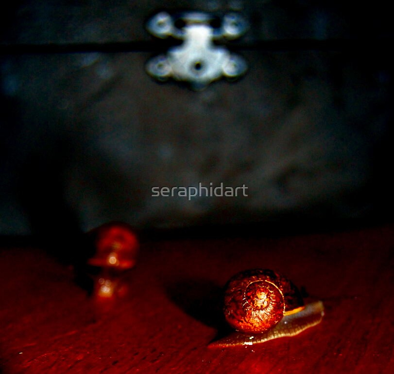Snails by seraphidart
