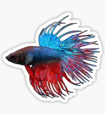 Betta Crowntail Sticker