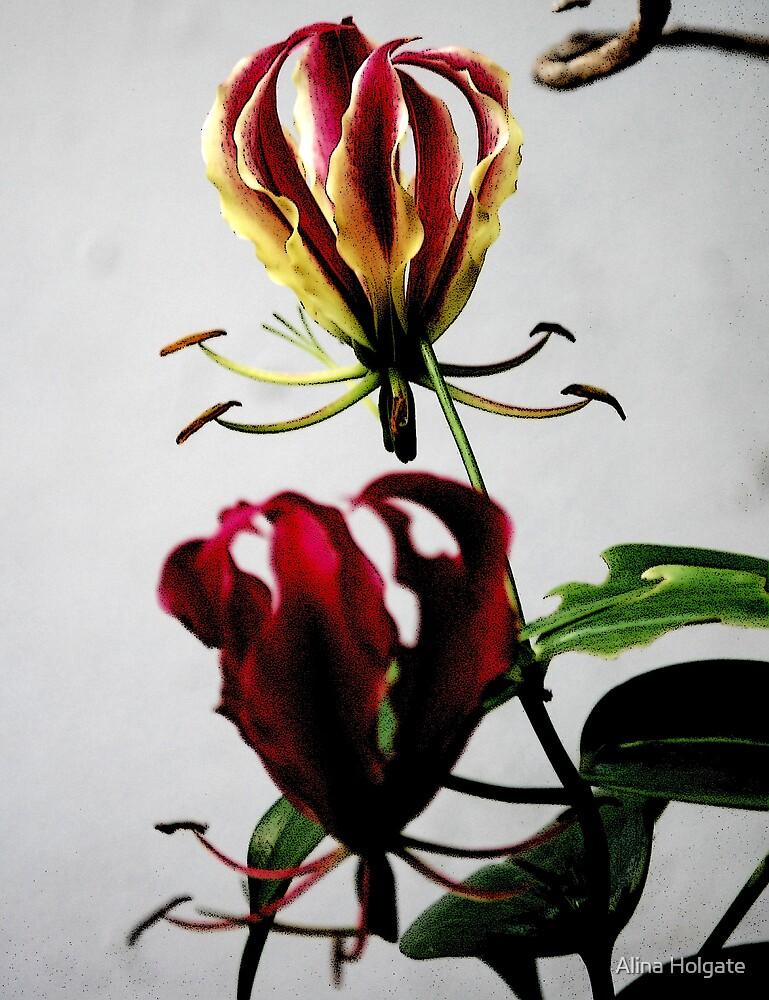 Gloriosa lilies in my backyard by Alina Holgate