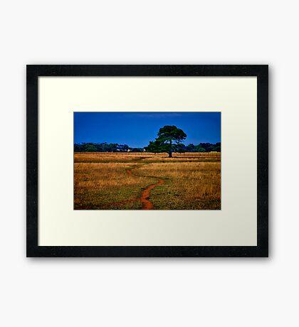 """The Sheep Track"" Framed Print"