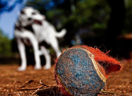 Bite Me, A Memoir: Adventures Of A Tennis Ball At The Dog Park. by Alex Preiss