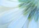 Daisy impressionism by Laurie Minor