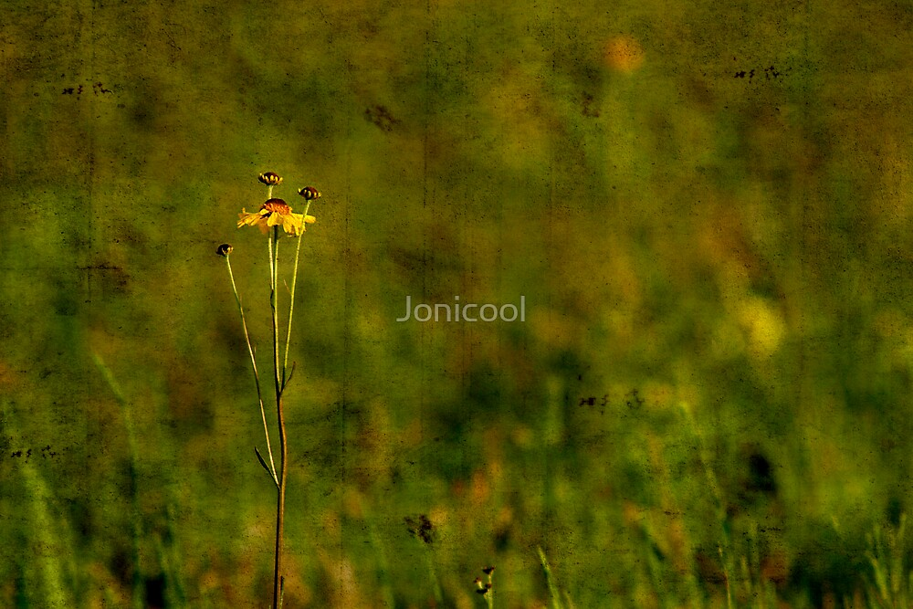 Simplicity by Jonicool