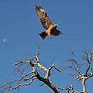 The Kite, The Moon, The Tree by Deborah V Townsend