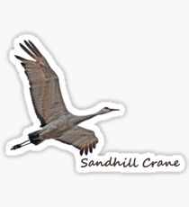 Sandhill Crane Sticker