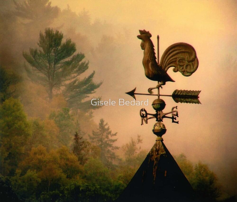 Rooster in the mist... by Gisele Bedard