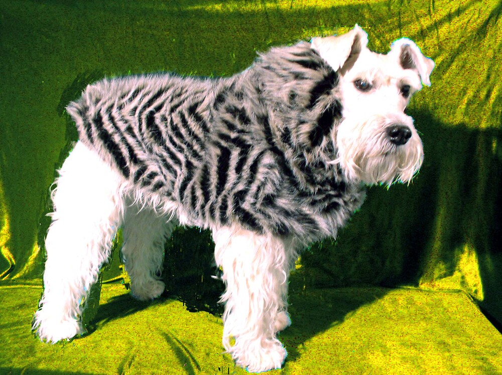 Fur fashion by carin berger