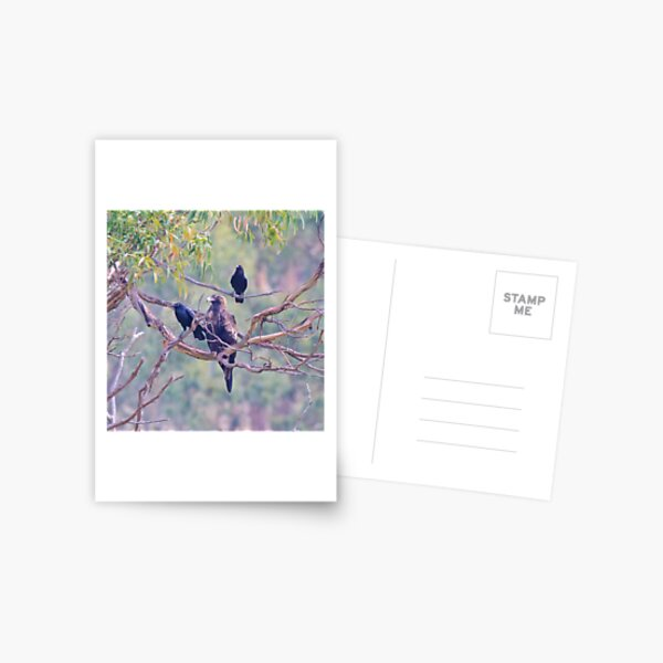 RAPTOR ~ Wedge-tailed Eagle STXJQ4QS and Forest Raven by David Irwin ~ WO Postcard