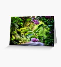 Spring Colours - Mt Wilson NSW Greeting Card