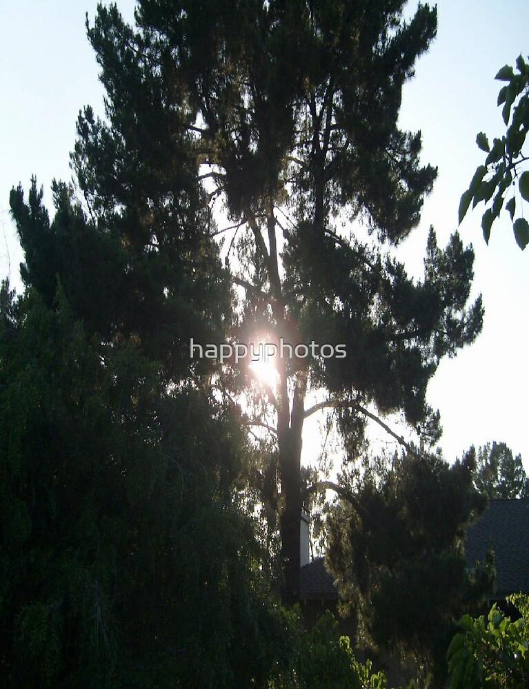 Sun through the trees by happyphotos