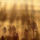 10.7.2017: Mist Over Marsh II by Petri Volanen