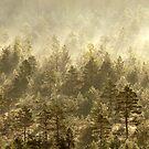 10.7.2017: Mist Over Marsh IV by Petri Volanen