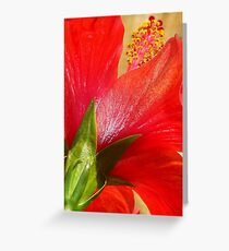 Back View of A Beautiful Bright Red Hibiscus Flower Greeting Card