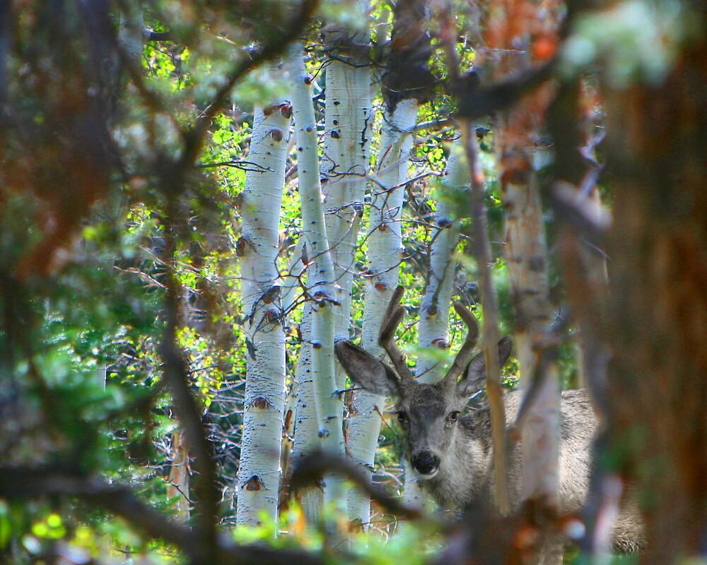 Peeking by Ken Fortie
