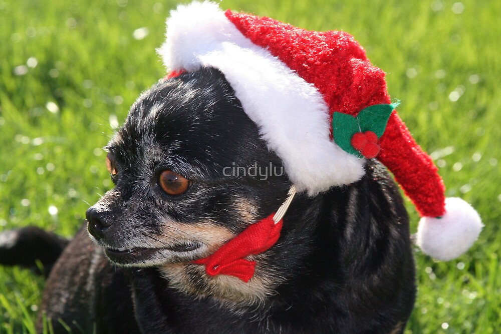 santa dog by cindylu