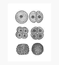 Embryogenesis Photographic Print