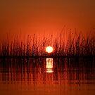Red Sunset by Deborah V Townsend