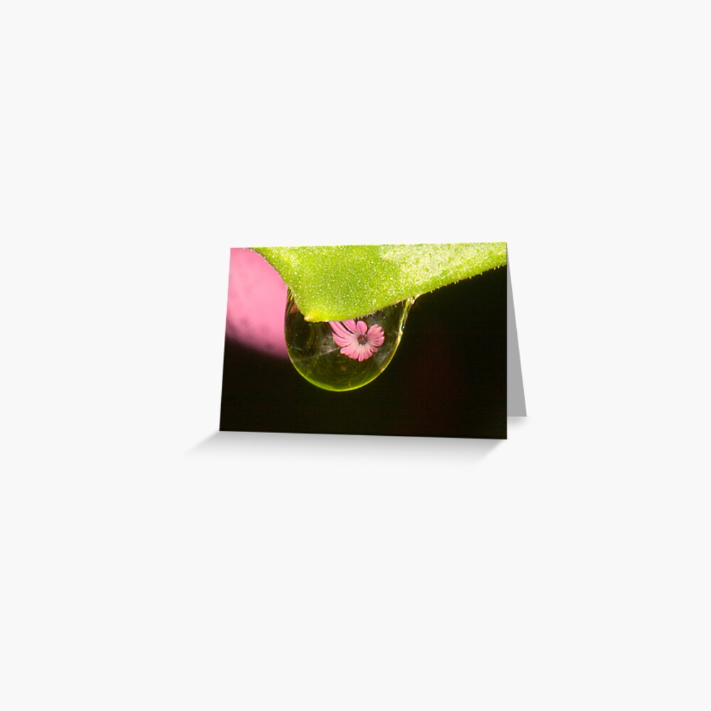 Water Drop Reflection Greeting Card
