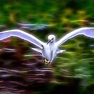White bird by BeardyGit