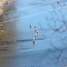 FLY FISHING LAKE TANEYCOMO by Brenda Planchon