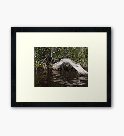 Mangrove Log Framed Print